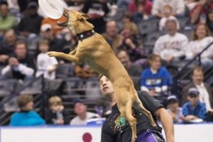 High-Flying Hounds Highlight Halftime Shows
