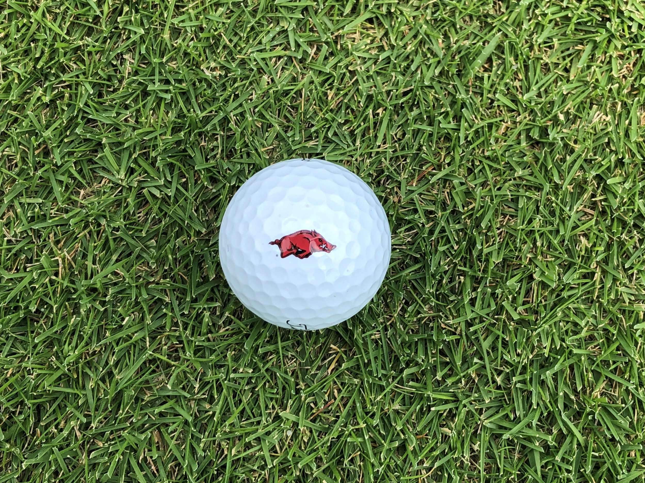 Arkansas Women's Golf Releases 2020 Fall Schedule
